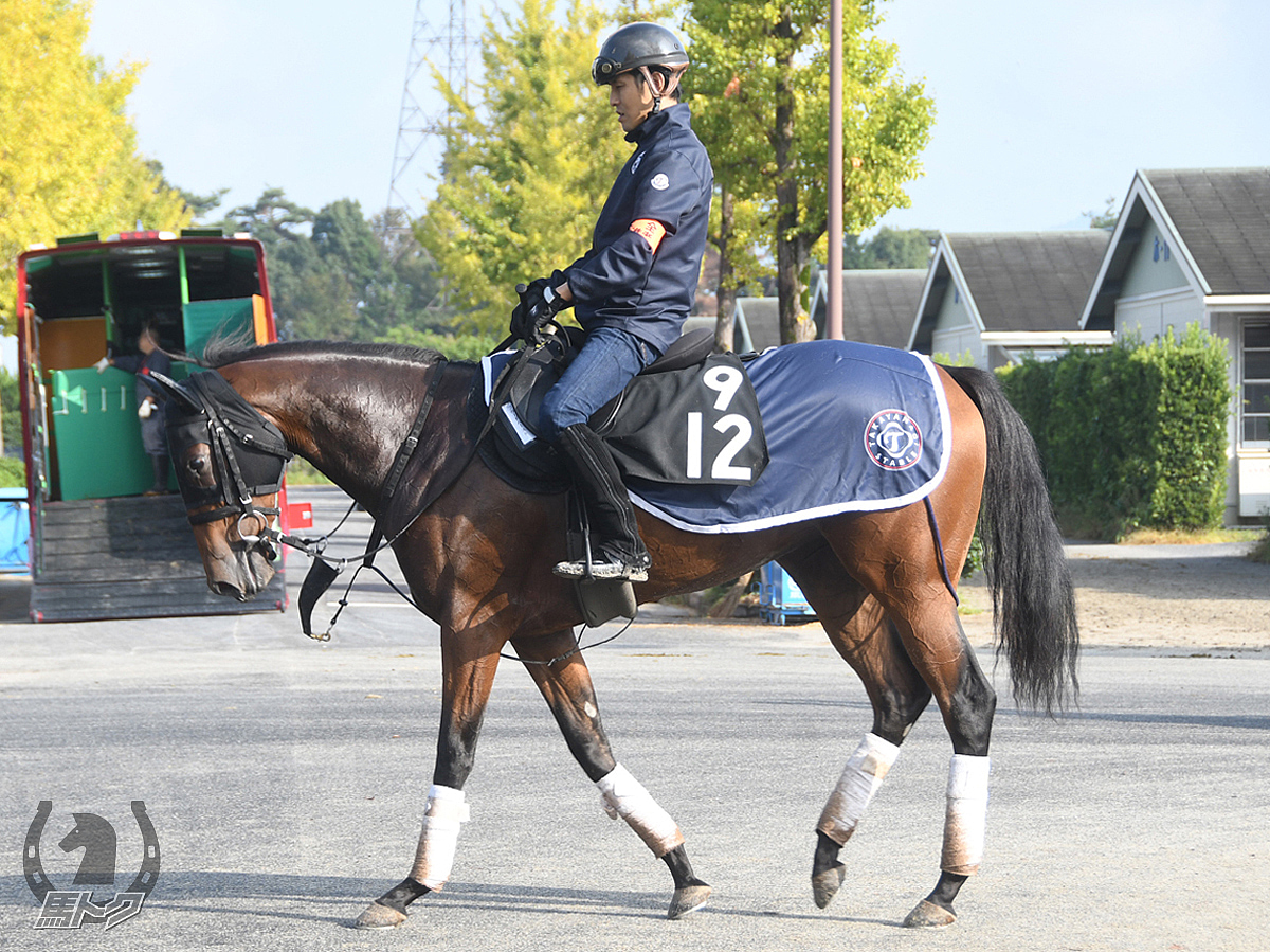 ブロードハーストの馬体写真