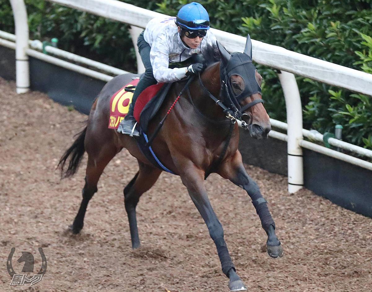 ブランノワールの馬体写真