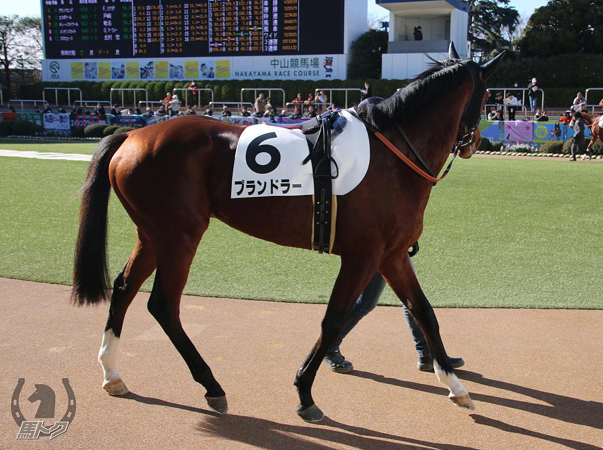 プランドラーの馬体写真
