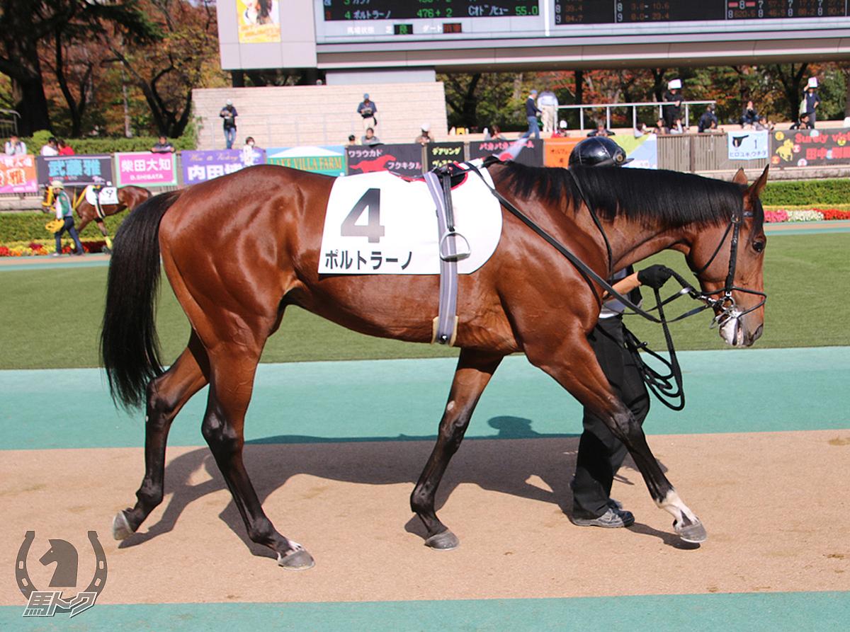 ポルトラーノの馬体写真
