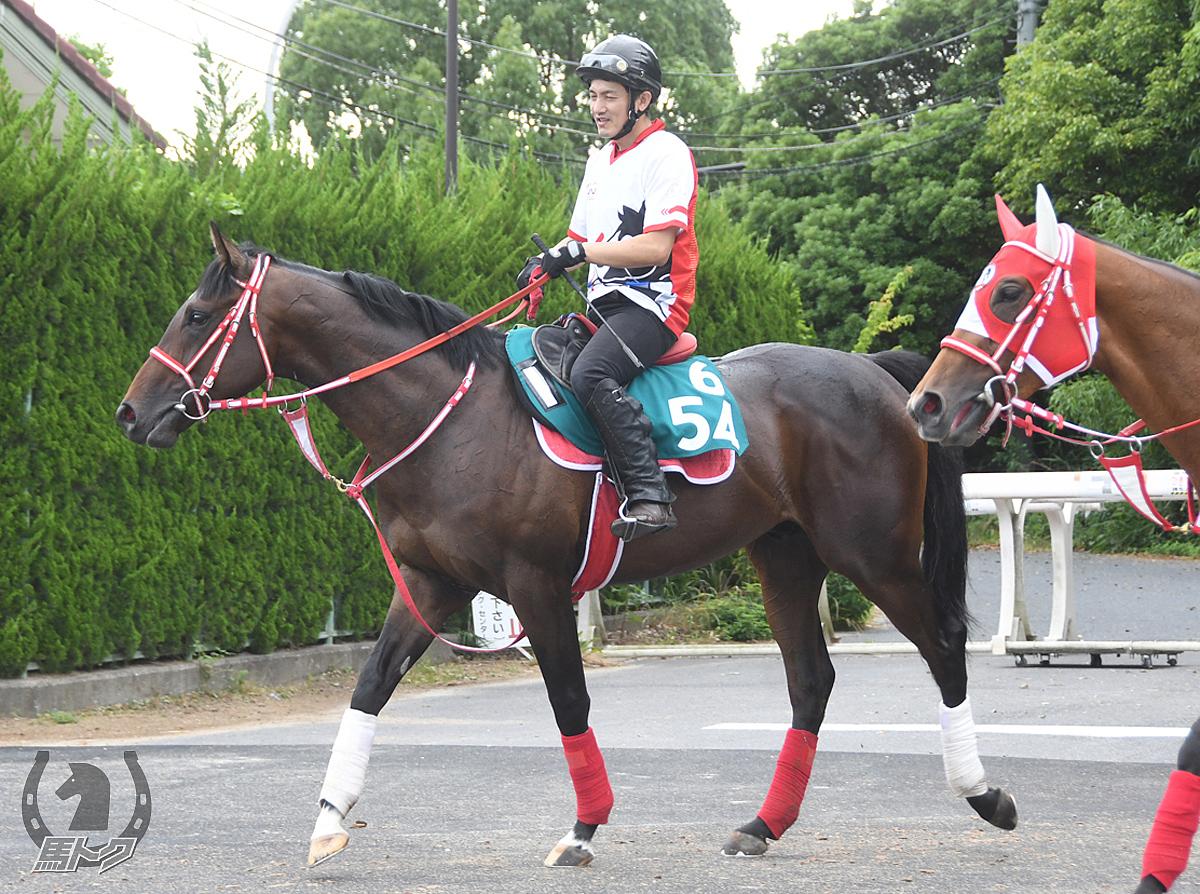 タイセイセイヴァーの馬体写真