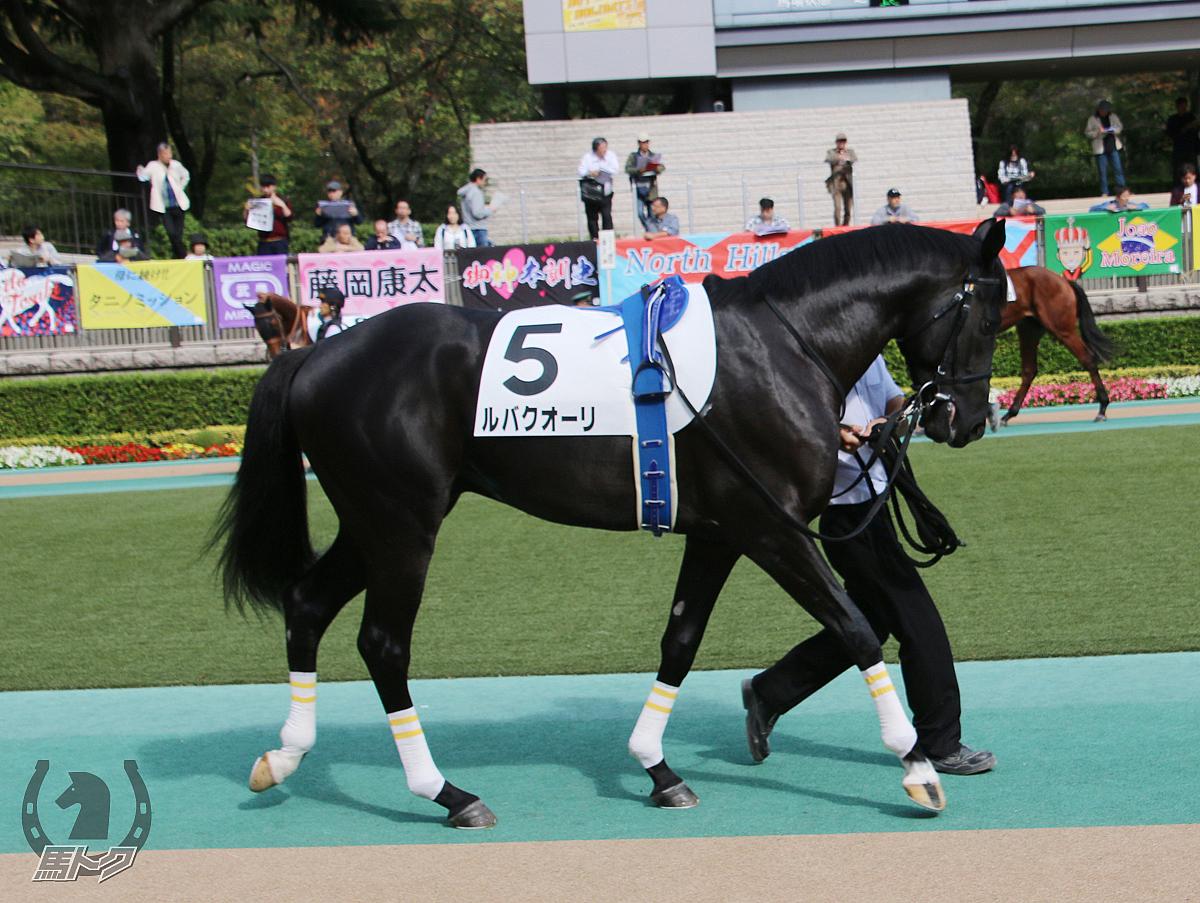 ルバクオーリの馬体写真