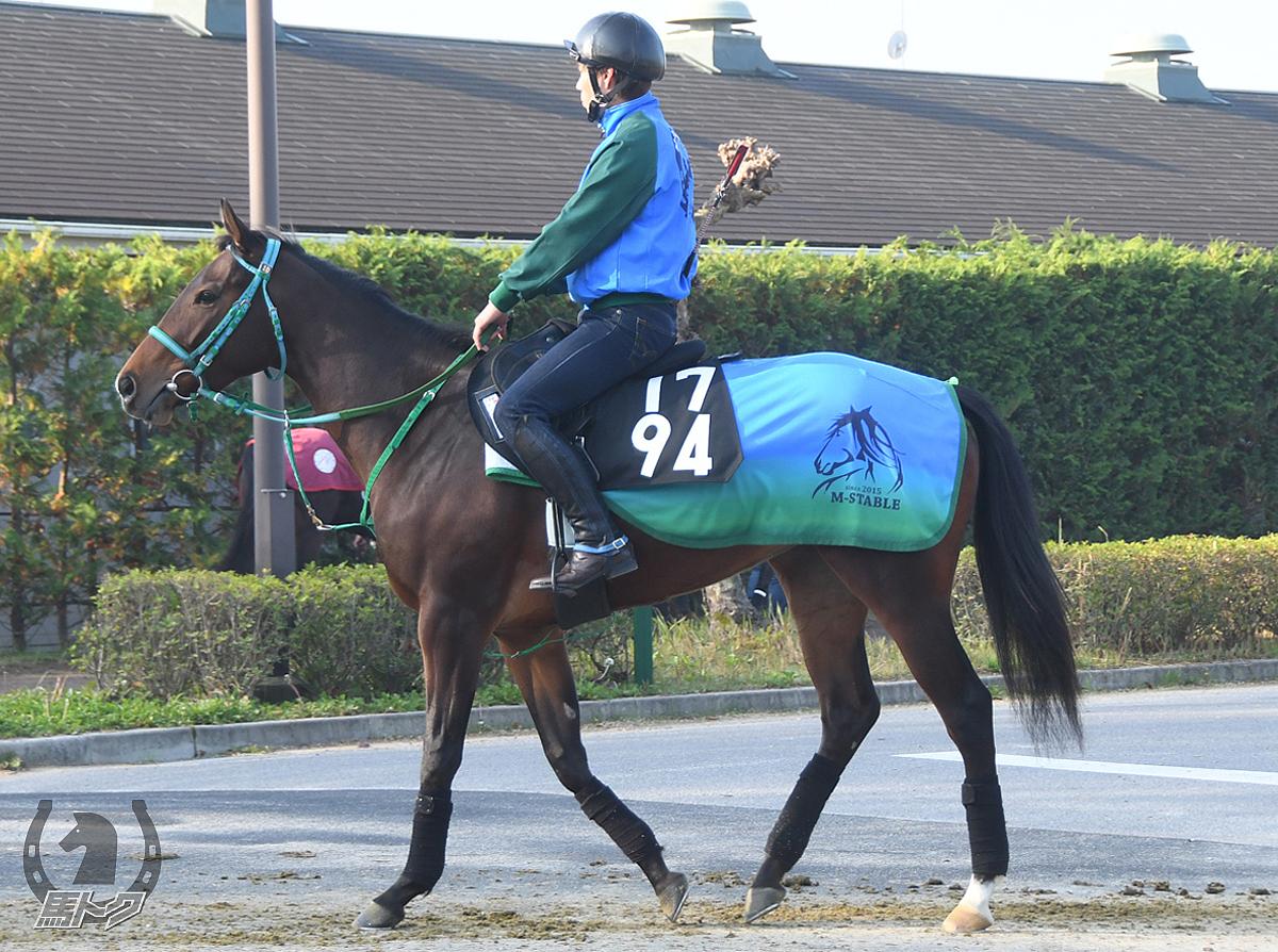 マハーラーニーの馬体写真