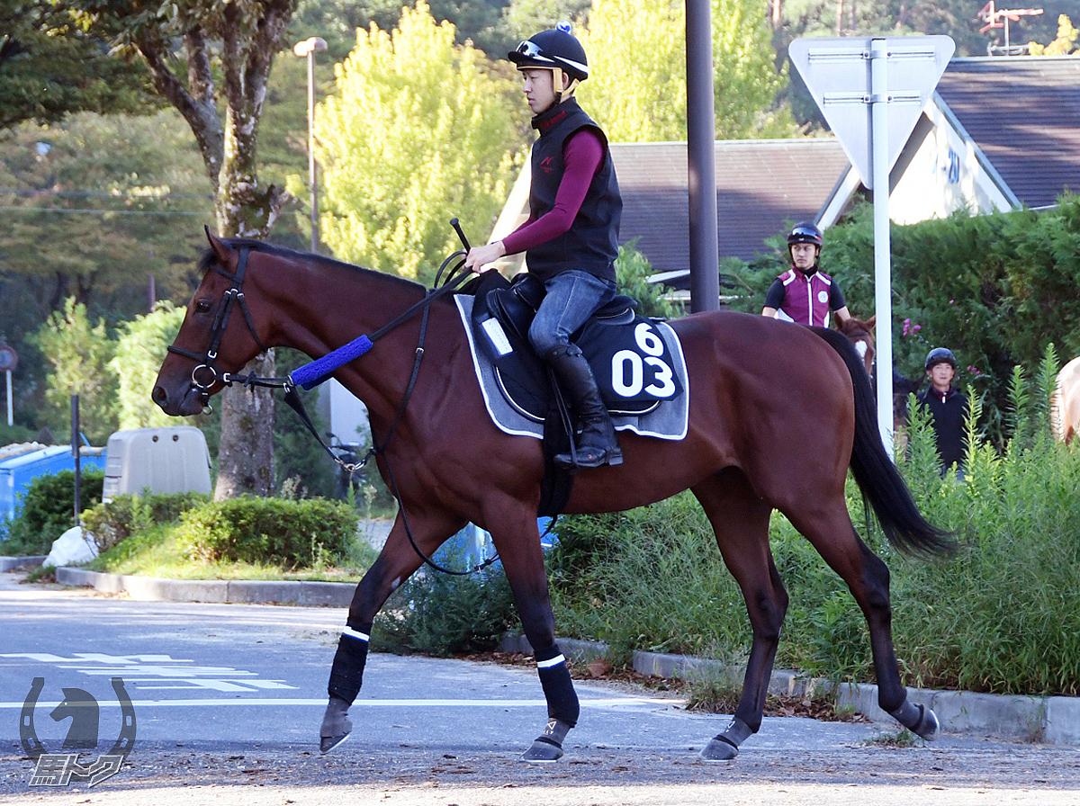 ダノンジャスティスの馬体写真