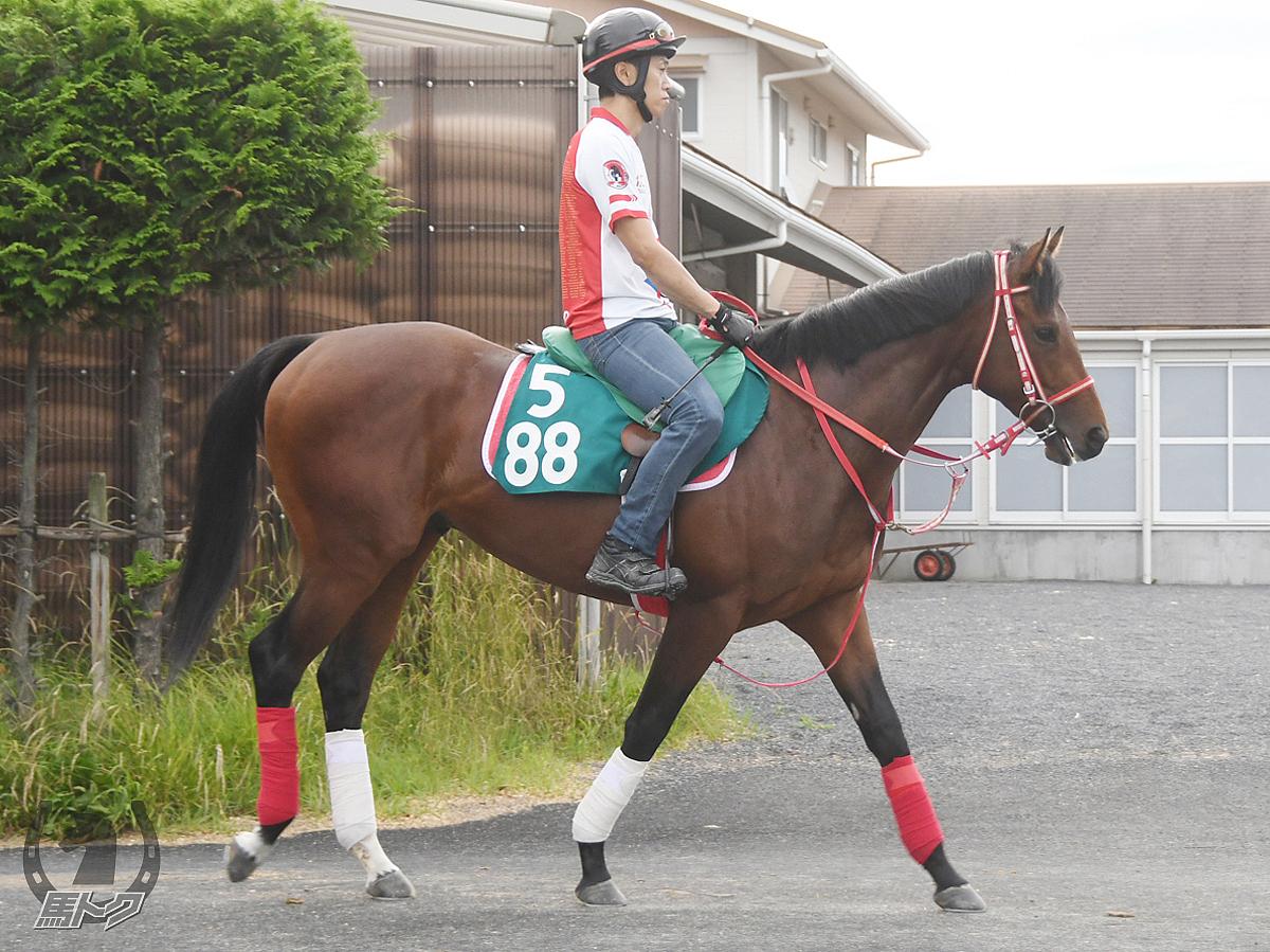 ウラノメトリアの馬体写真
