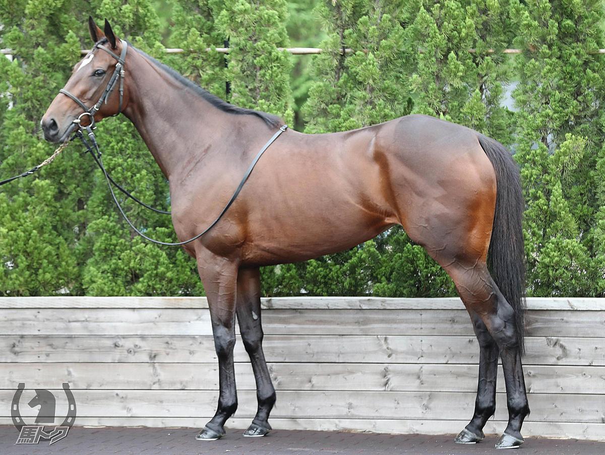 ダノンファンタジーの馬体写真