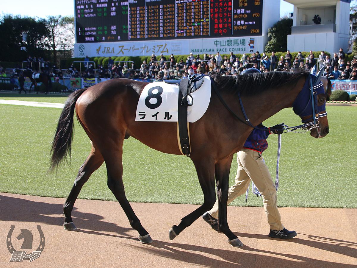 ライルの馬体写真