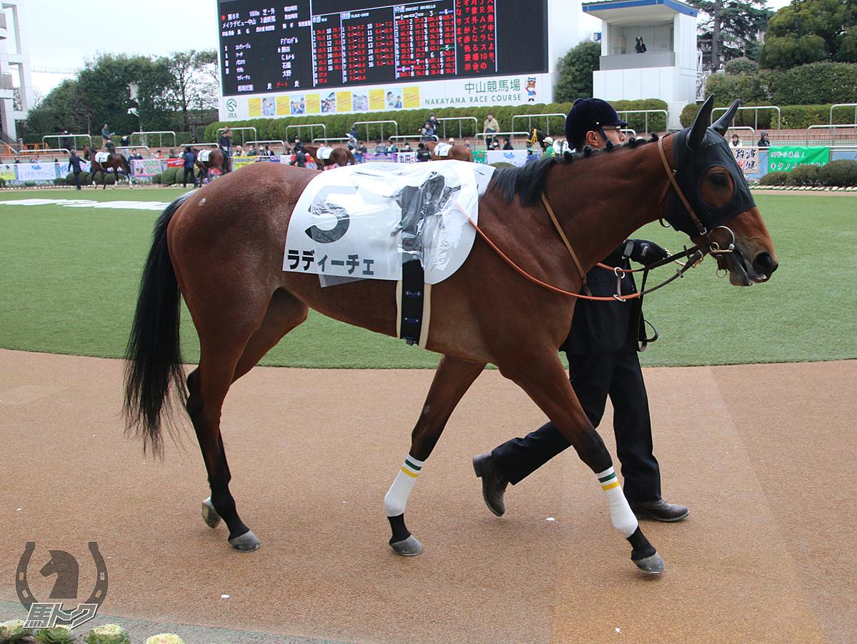 ラディーチェの馬体写真