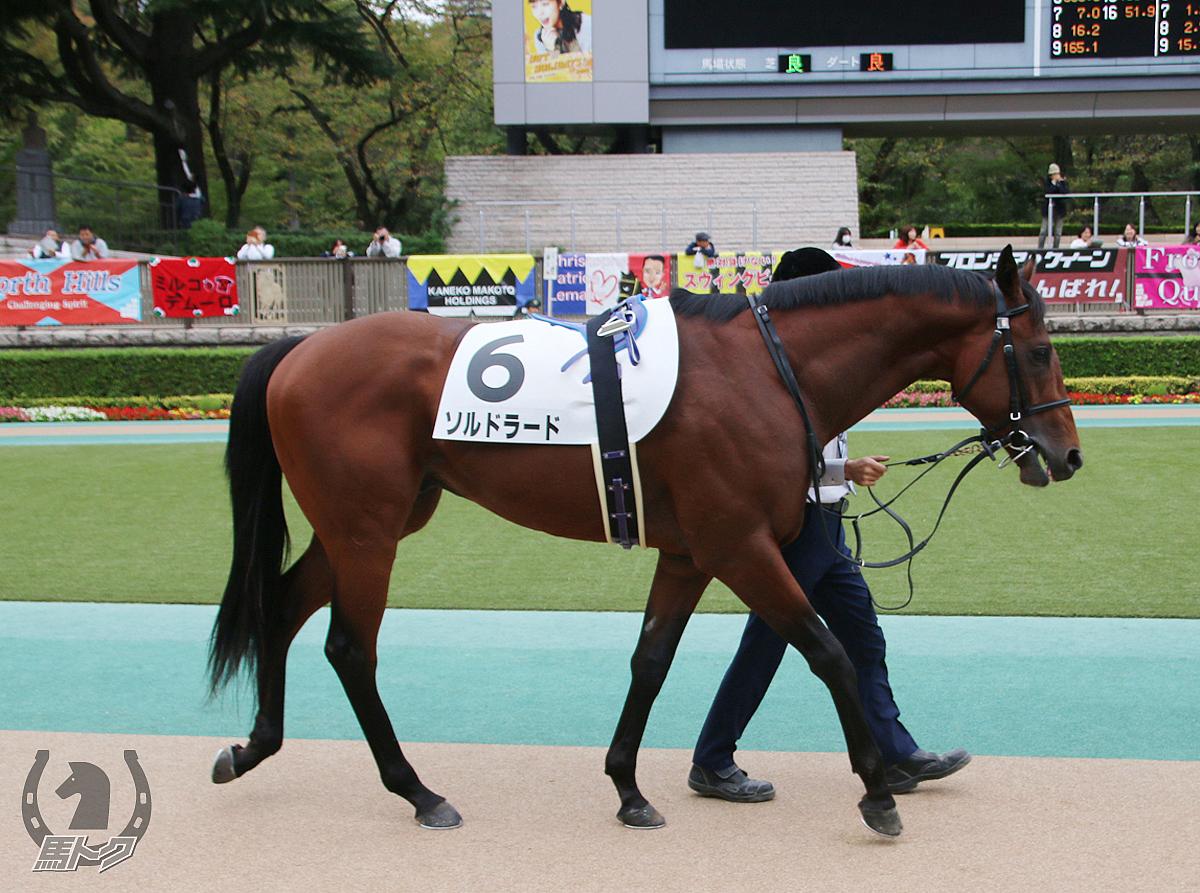 ソルドラードの馬体写真