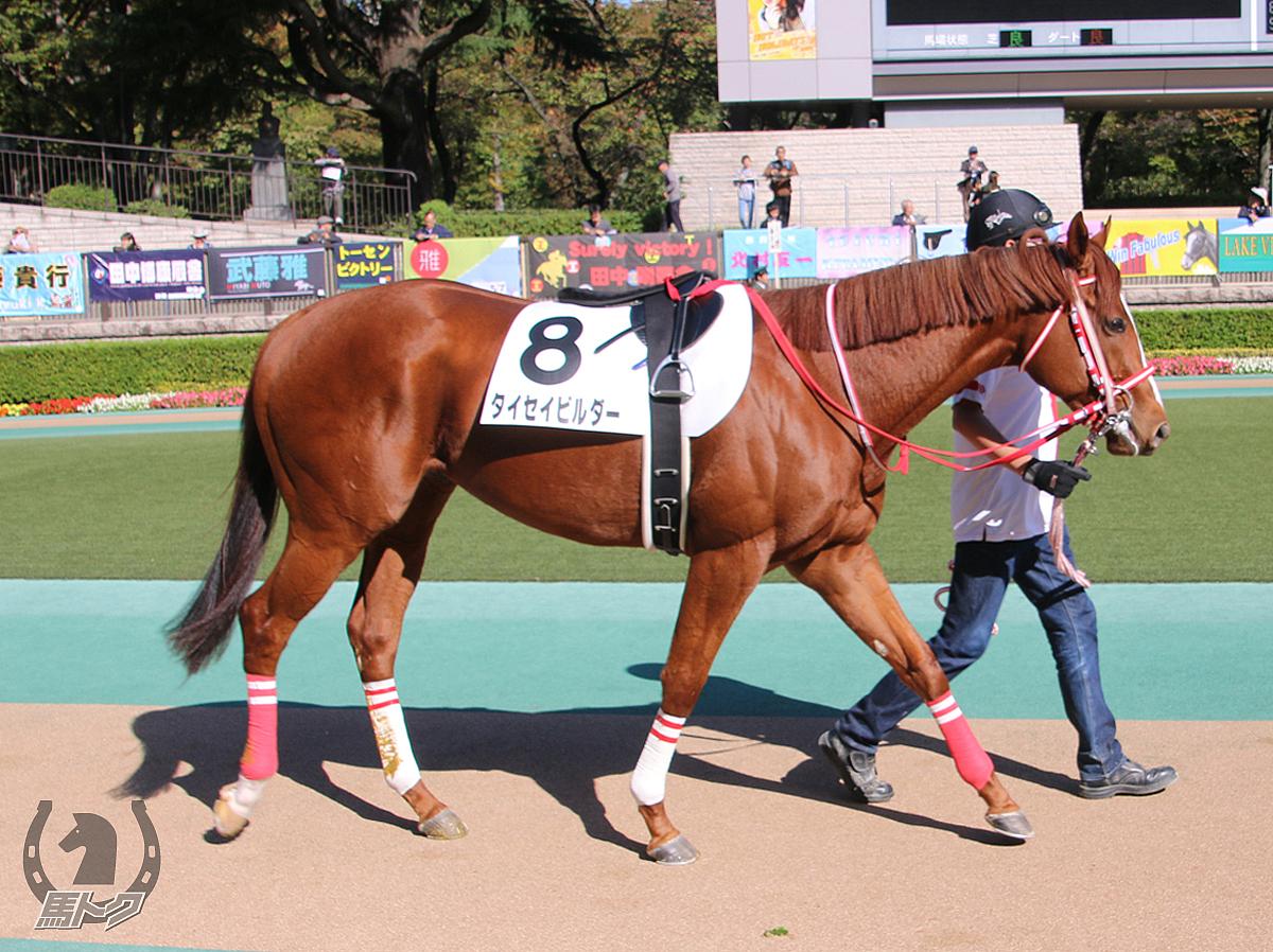 タイセイビルダーの馬体写真