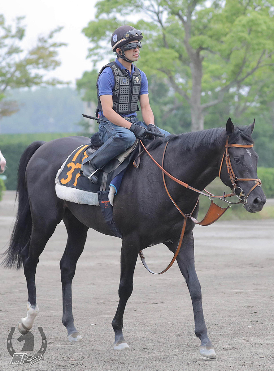 ヒシイグアスの馬体写真