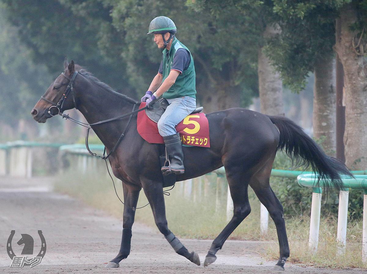 コントラチェックの馬体写真