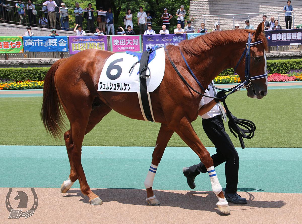フェルシュテルケンの馬体写真