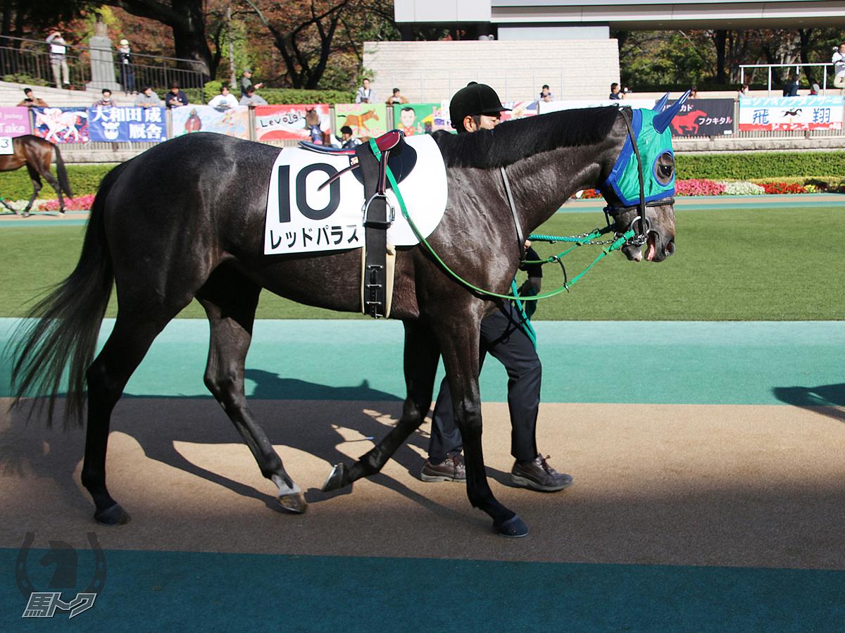 レッドパラスの馬体写真