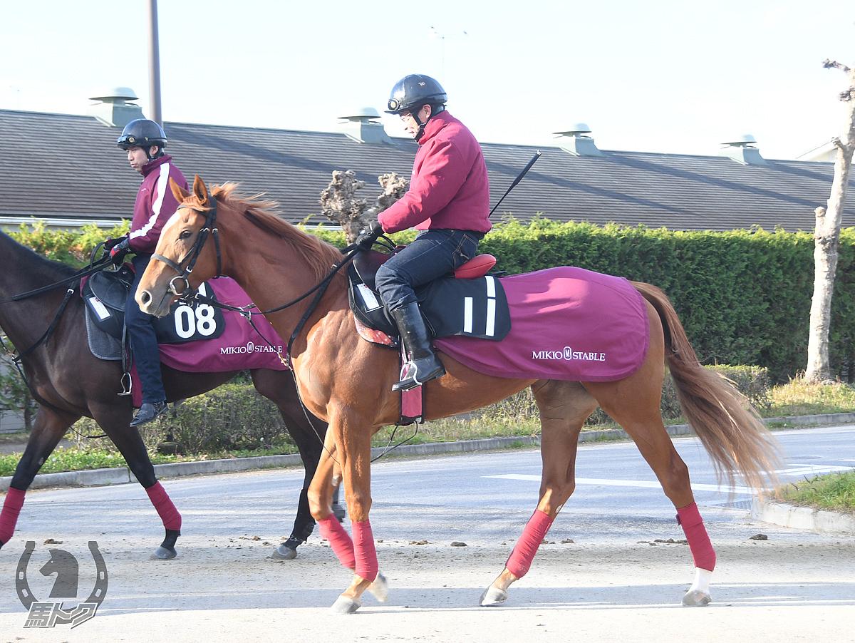 ウィズリーの馬体写真