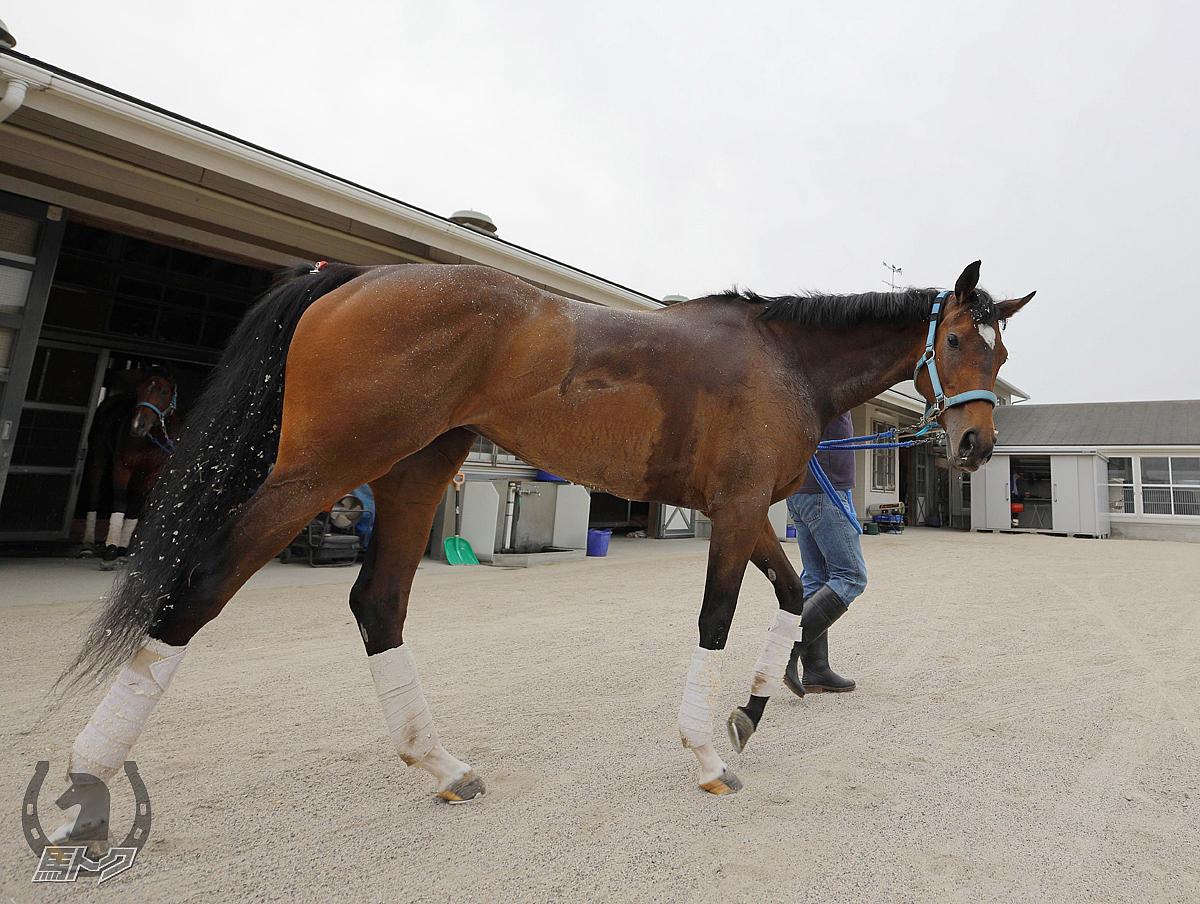 アクアミラビリスの馬体写真