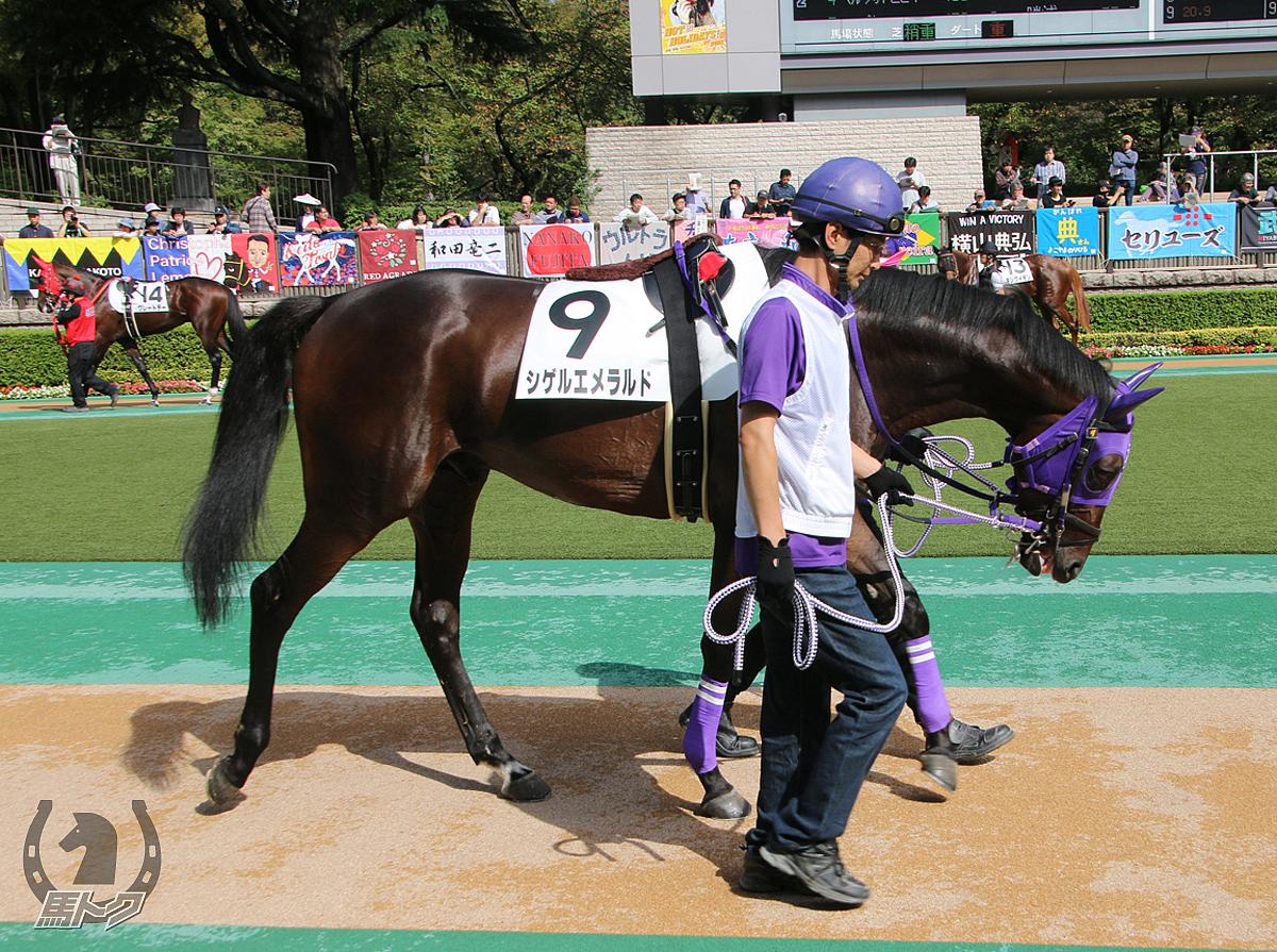 シゲルエメラルドの馬体写真