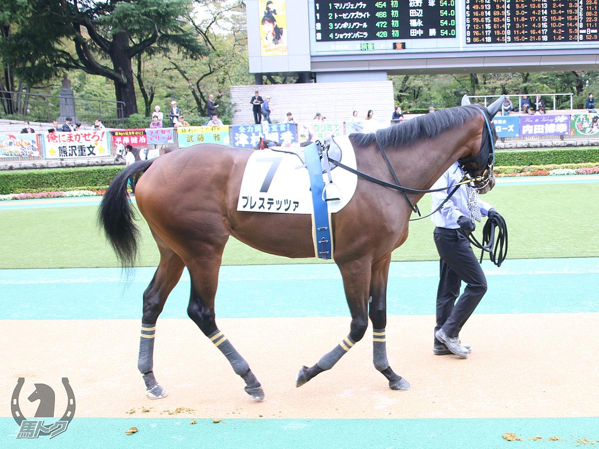プレステッツァの馬体写真