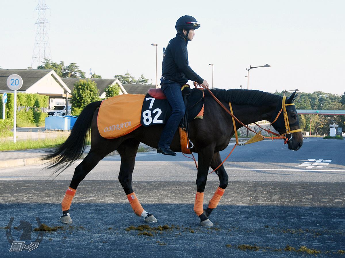 バラックパリンカの馬体写真
