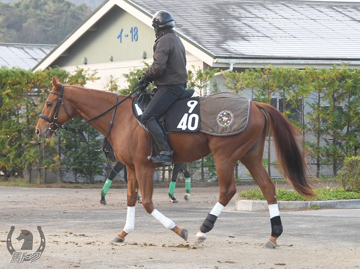 ポップフランセの馬体写真
