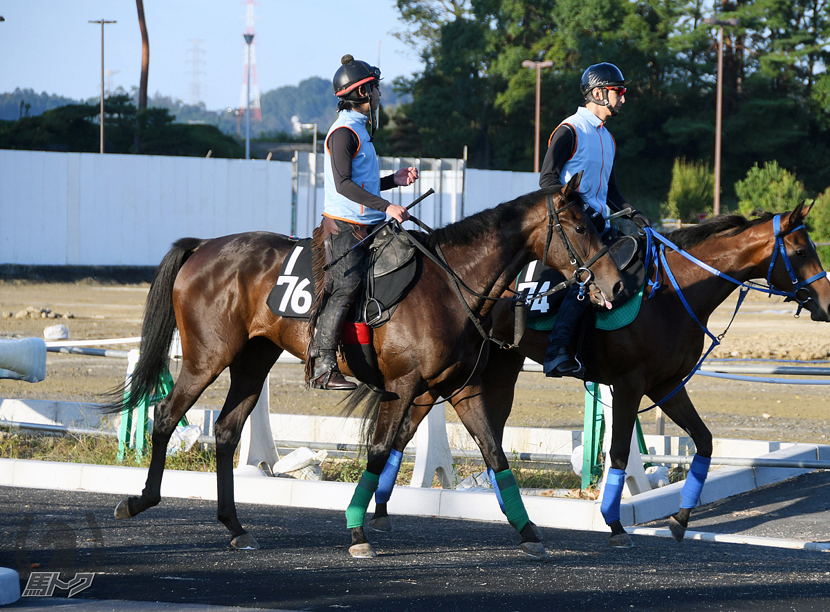 エメラルドスピアーの馬体写真