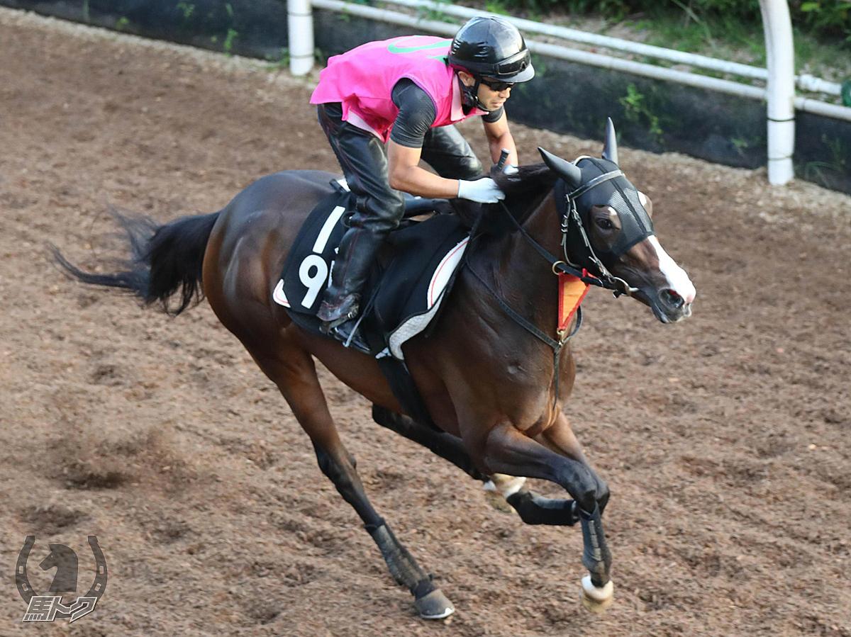 アルティマリガーレの馬体写真