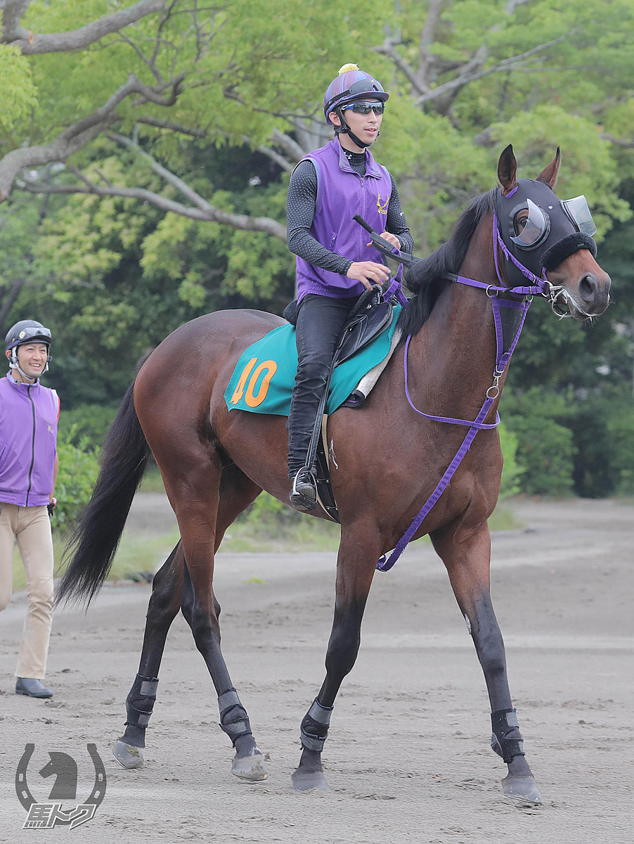 シャドウセッションの馬体写真
