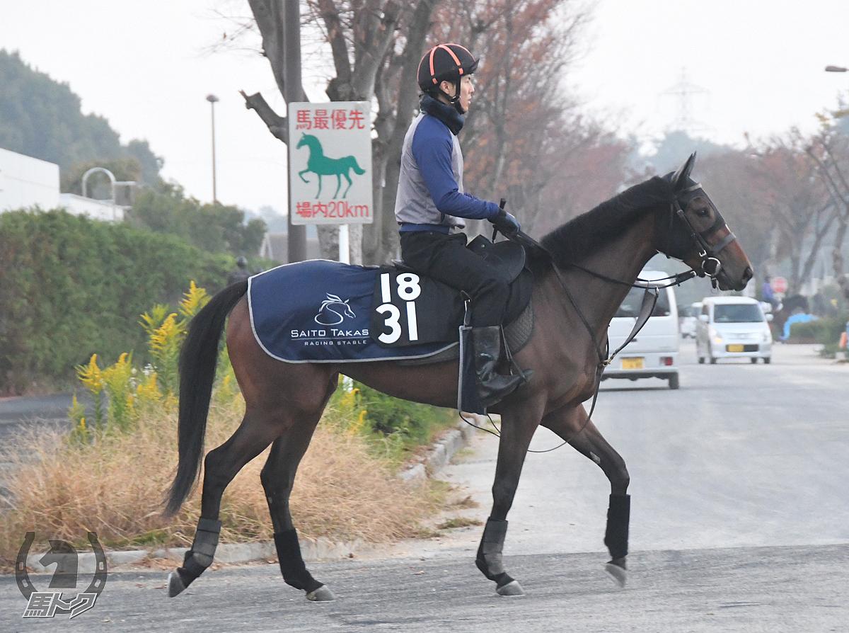 トワイライトパレスの馬体写真