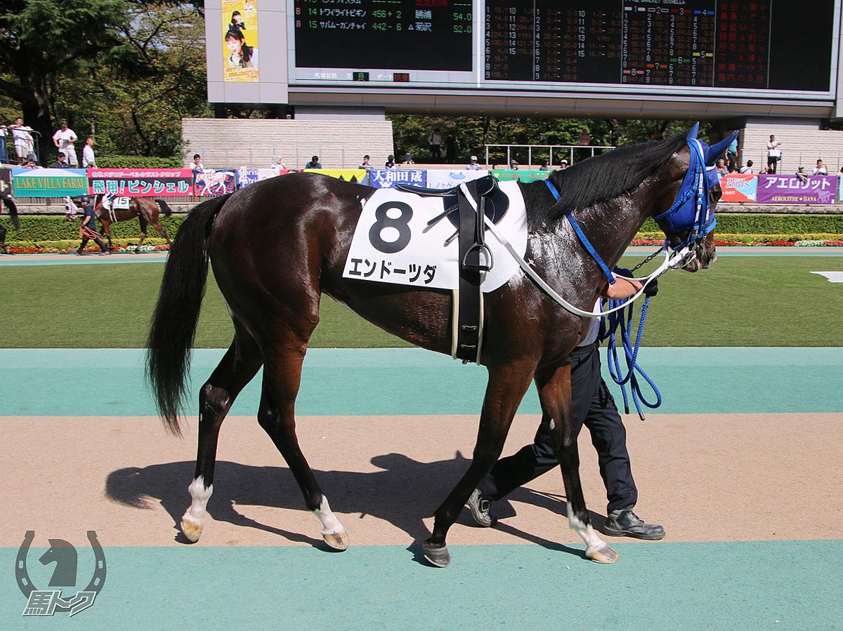 エンドーツダの馬体写真