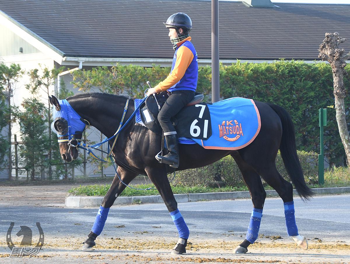 ハギノアップロードの馬体写真