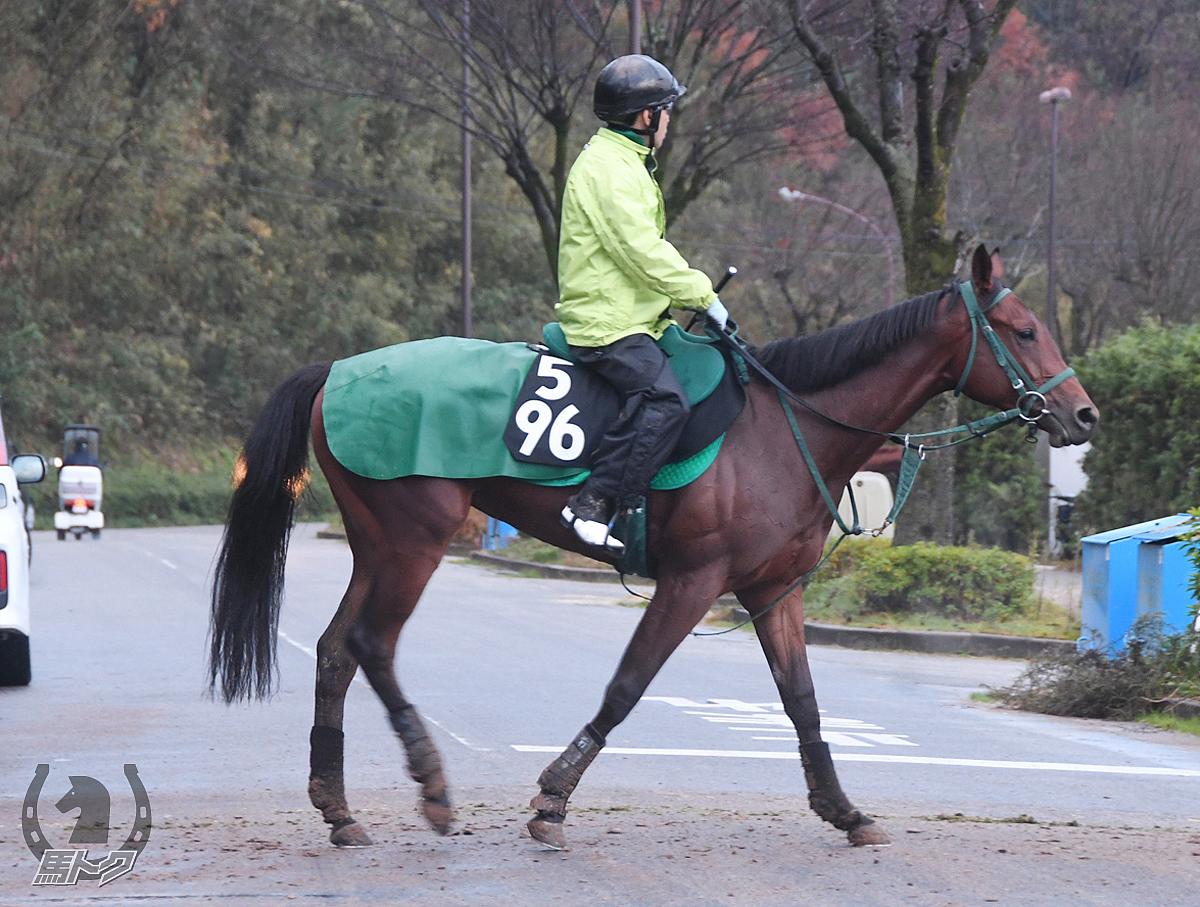 ダズリンの馬体写真