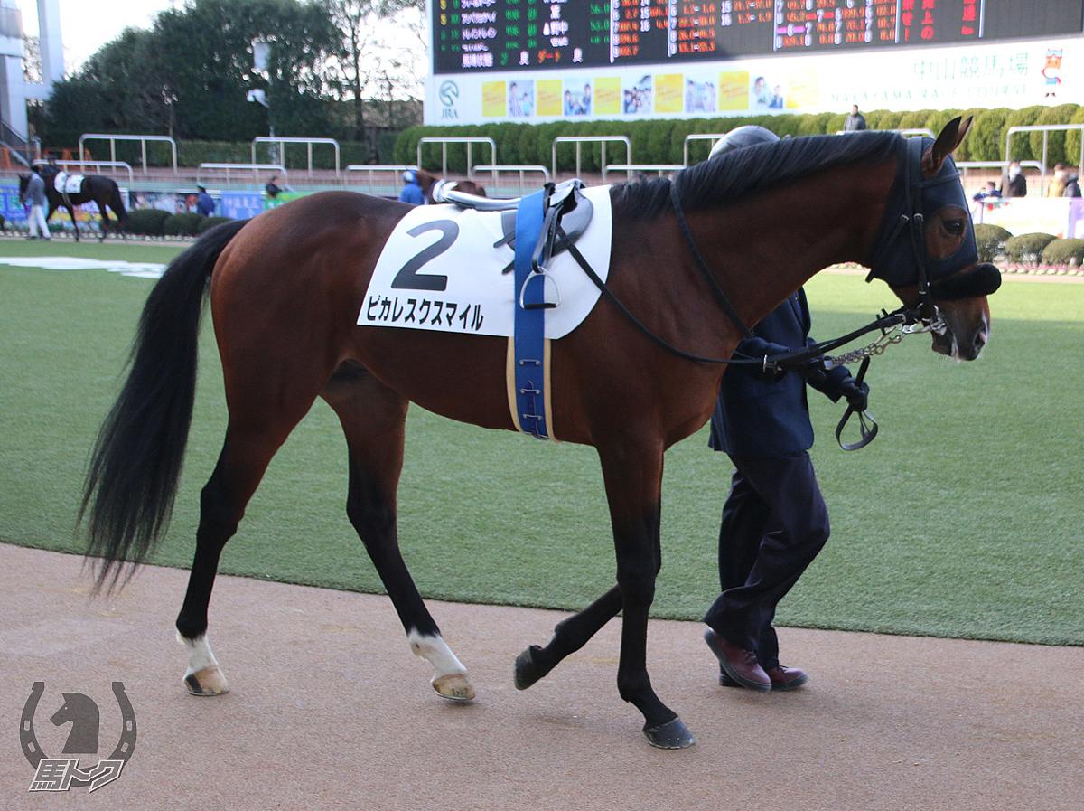 ピカレスクスマイルの馬体写真