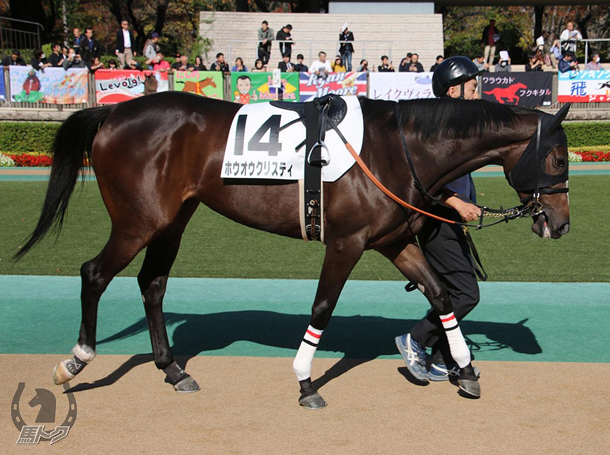 ホウオウクリスティの馬体写真
