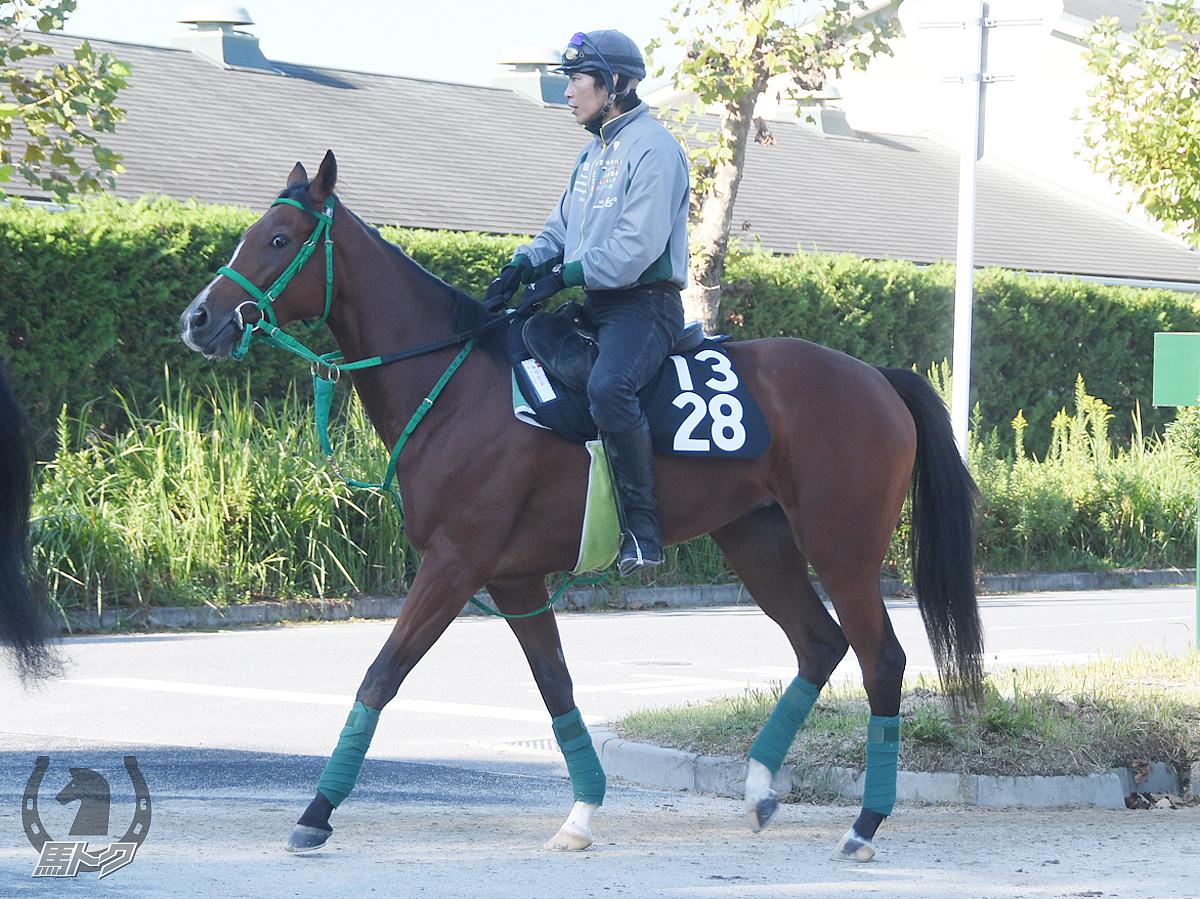 ルベリエの馬体写真