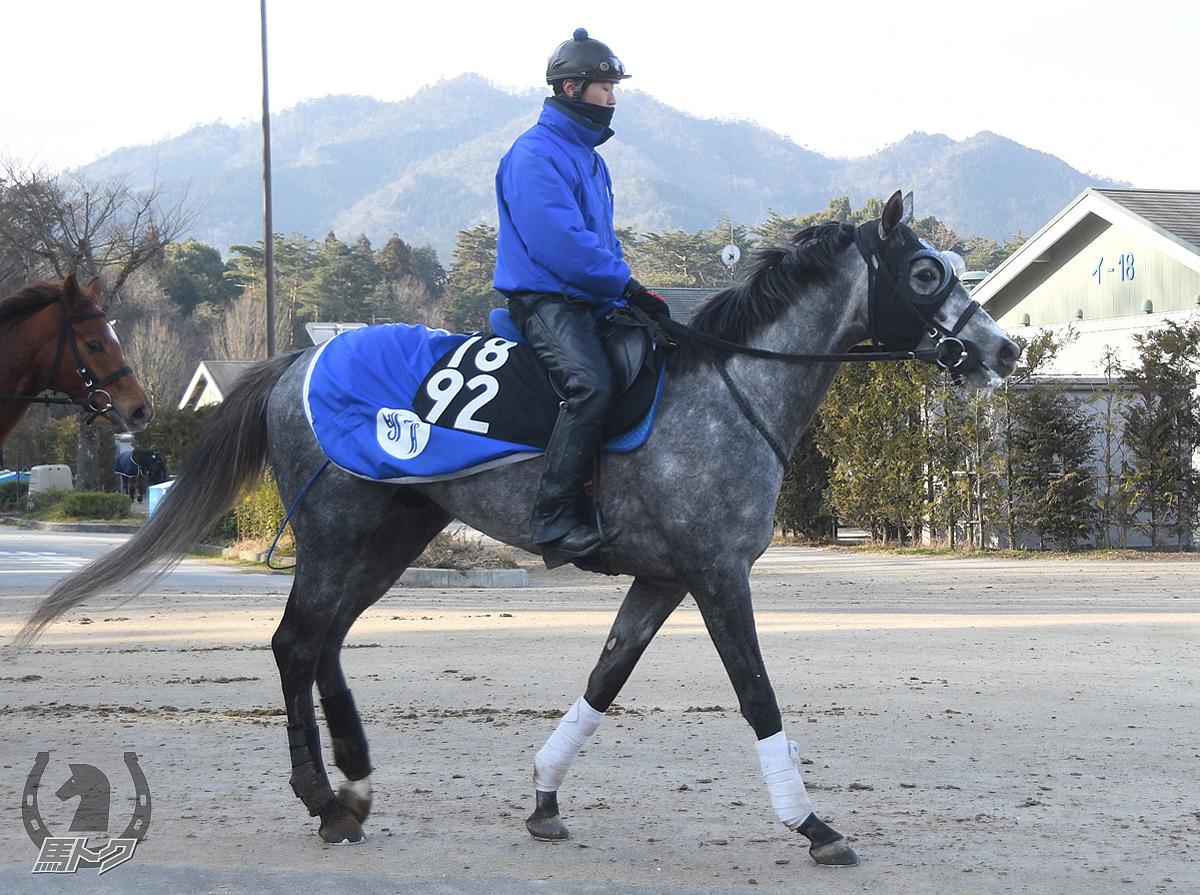 シルヴァーソニックの馬体写真