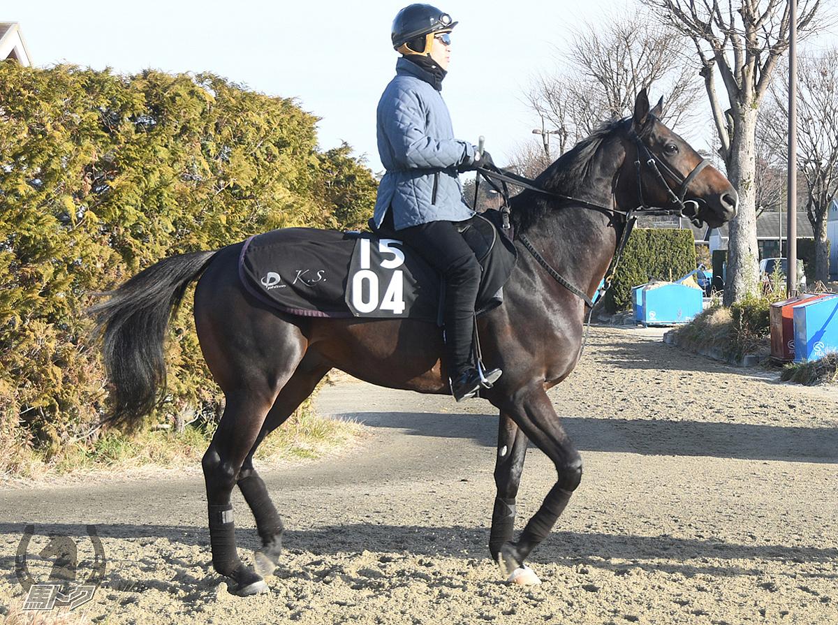 エアミホークの馬体写真