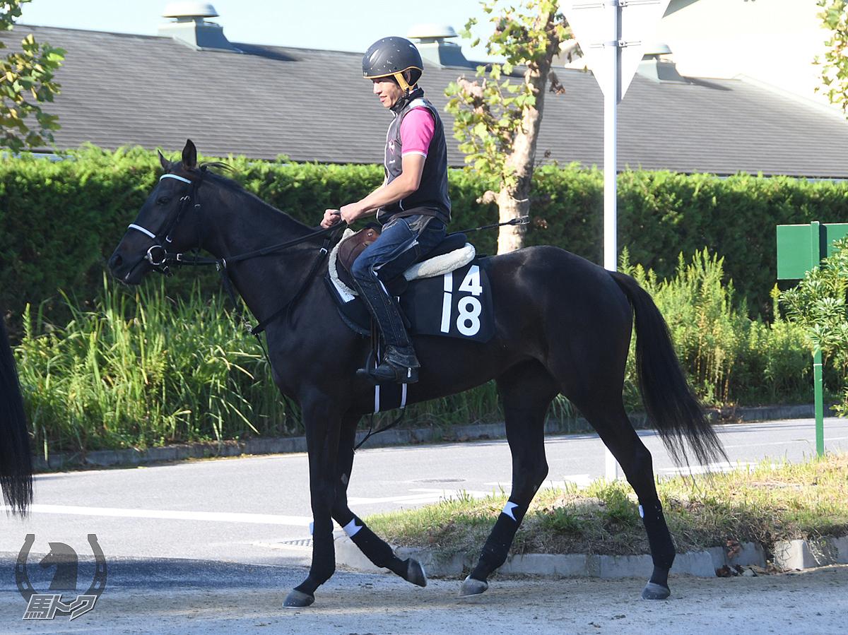 ブライトホーンの馬体写真