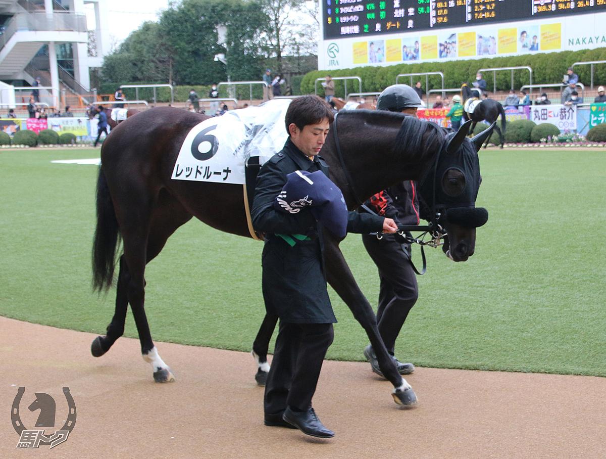 レッドルーナの馬体写真