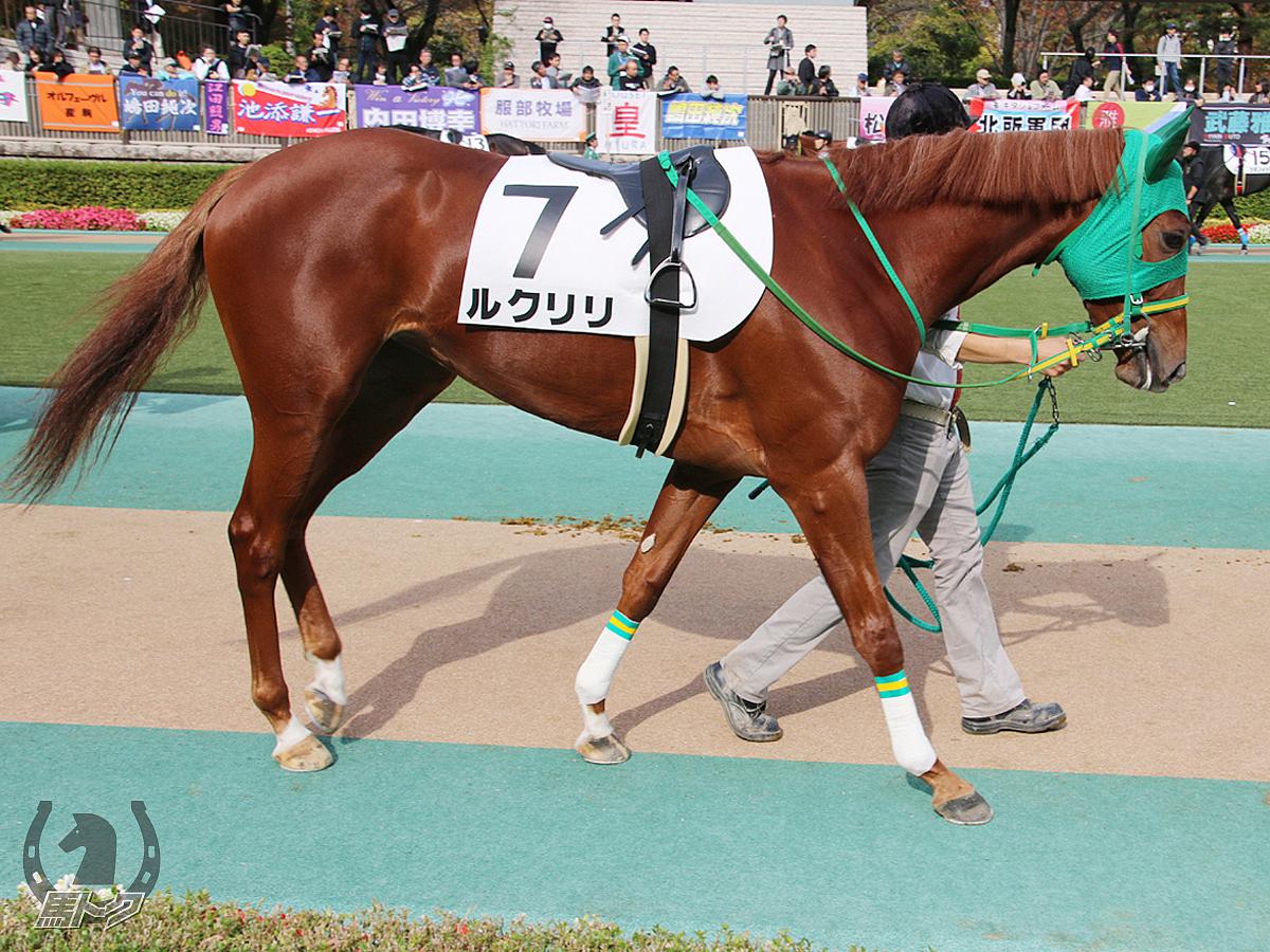 ルクリリの馬体写真