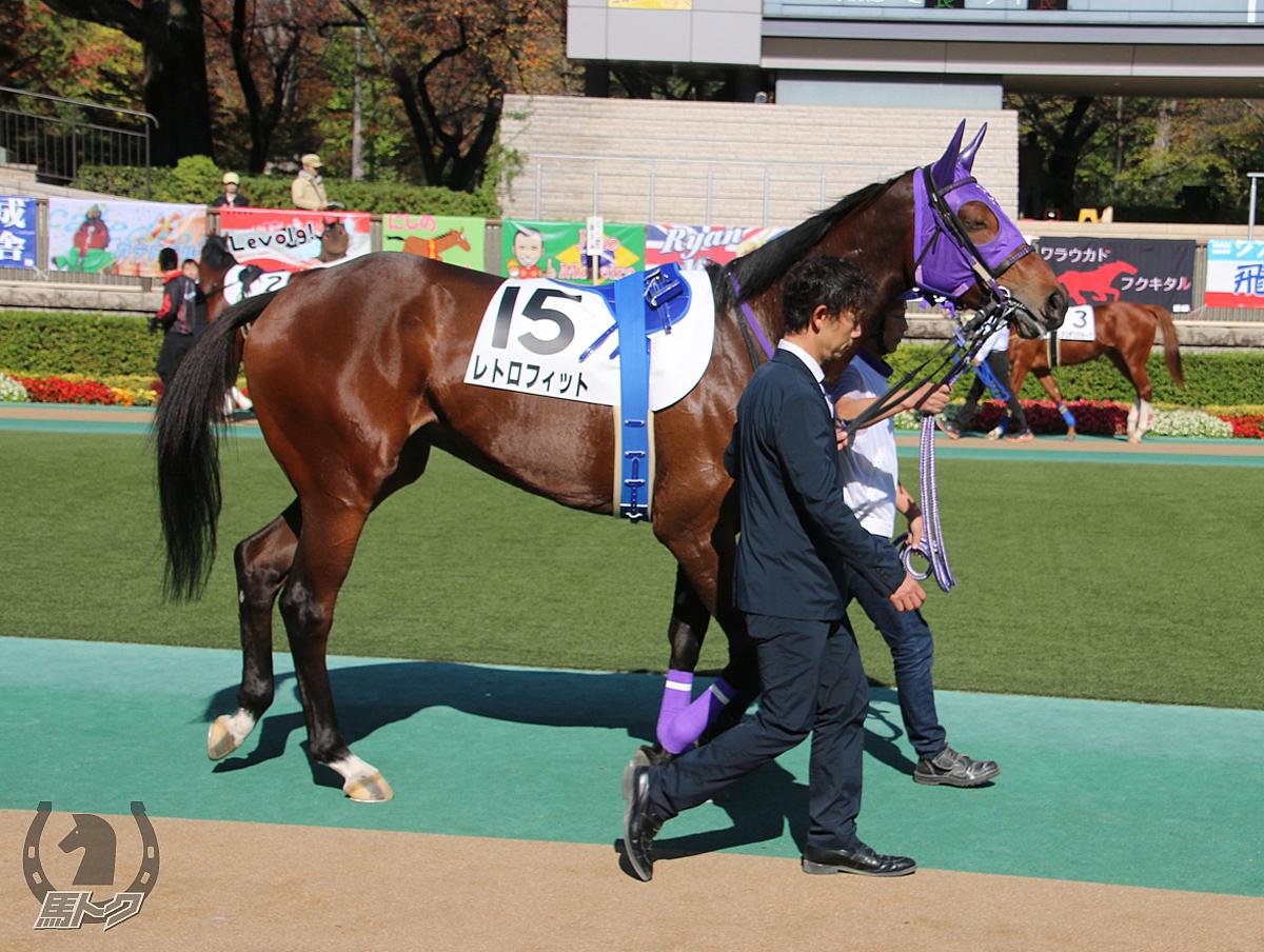 レトロフィットの馬体写真