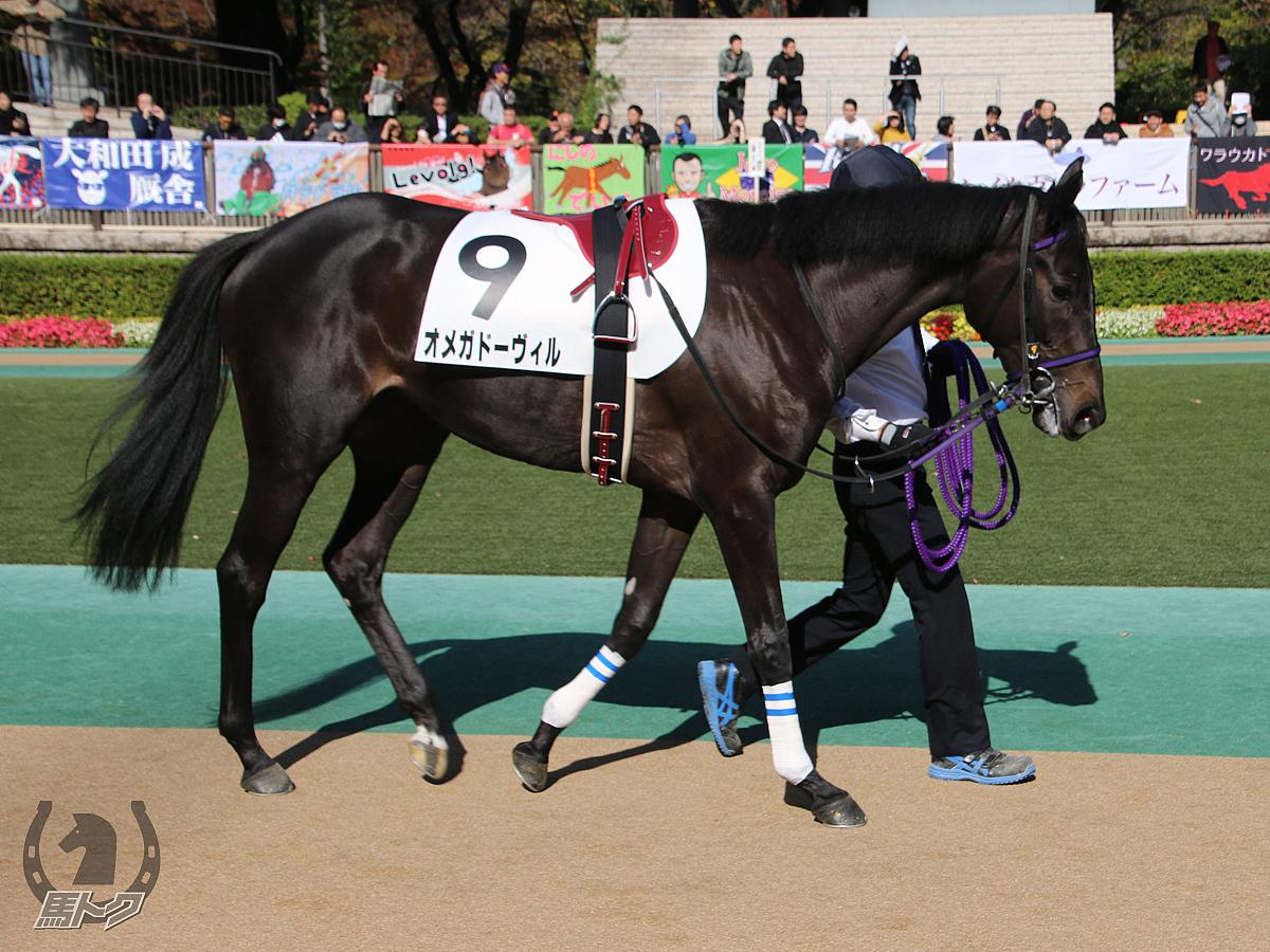 オメガドーヴィルの馬体写真