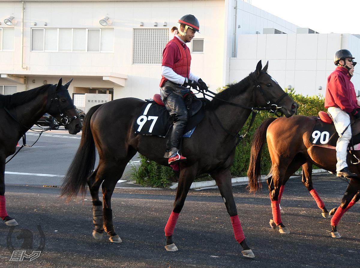 オメガハートクィンの馬体写真