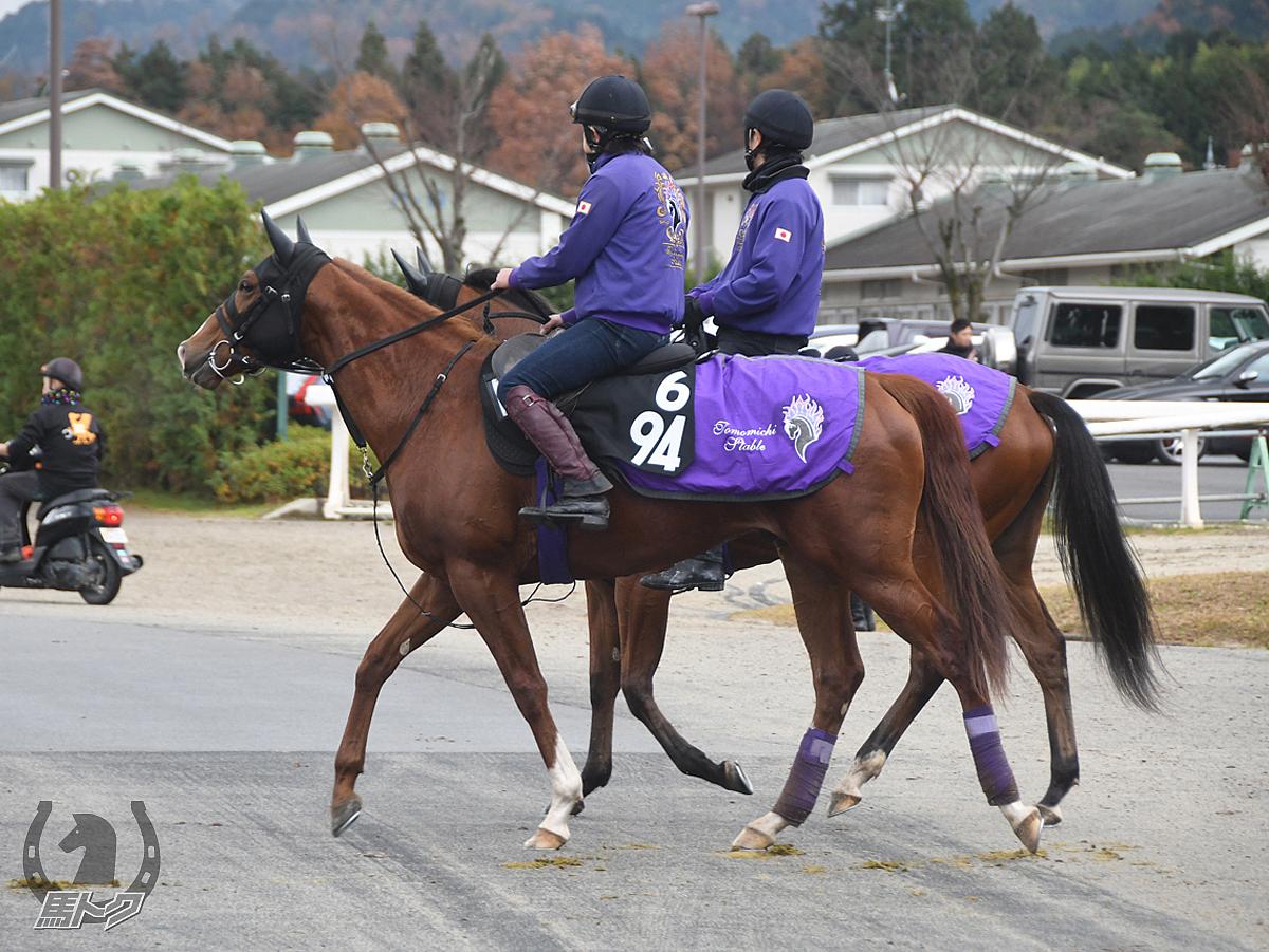 トップオブメジャーの馬体写真