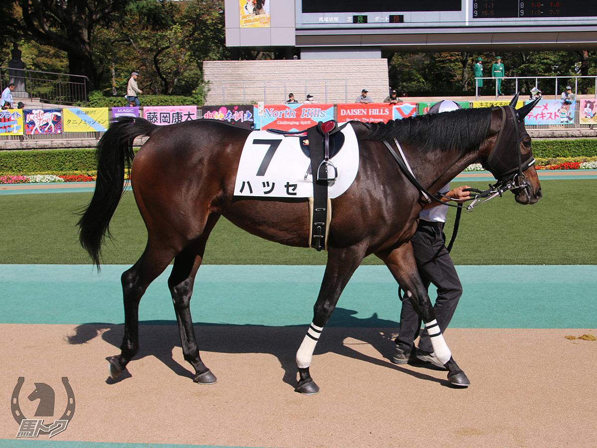 ハツセの馬体写真