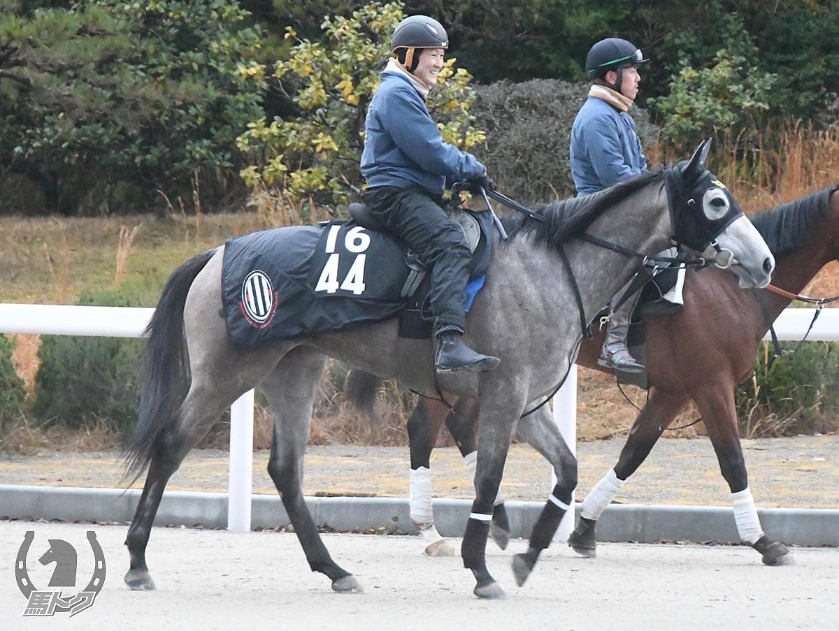 カレンモエの馬体写真