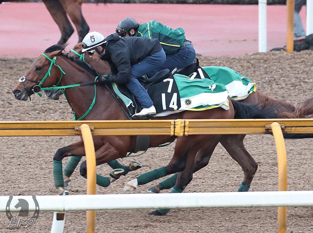 トーセンカンビーナの馬体写真