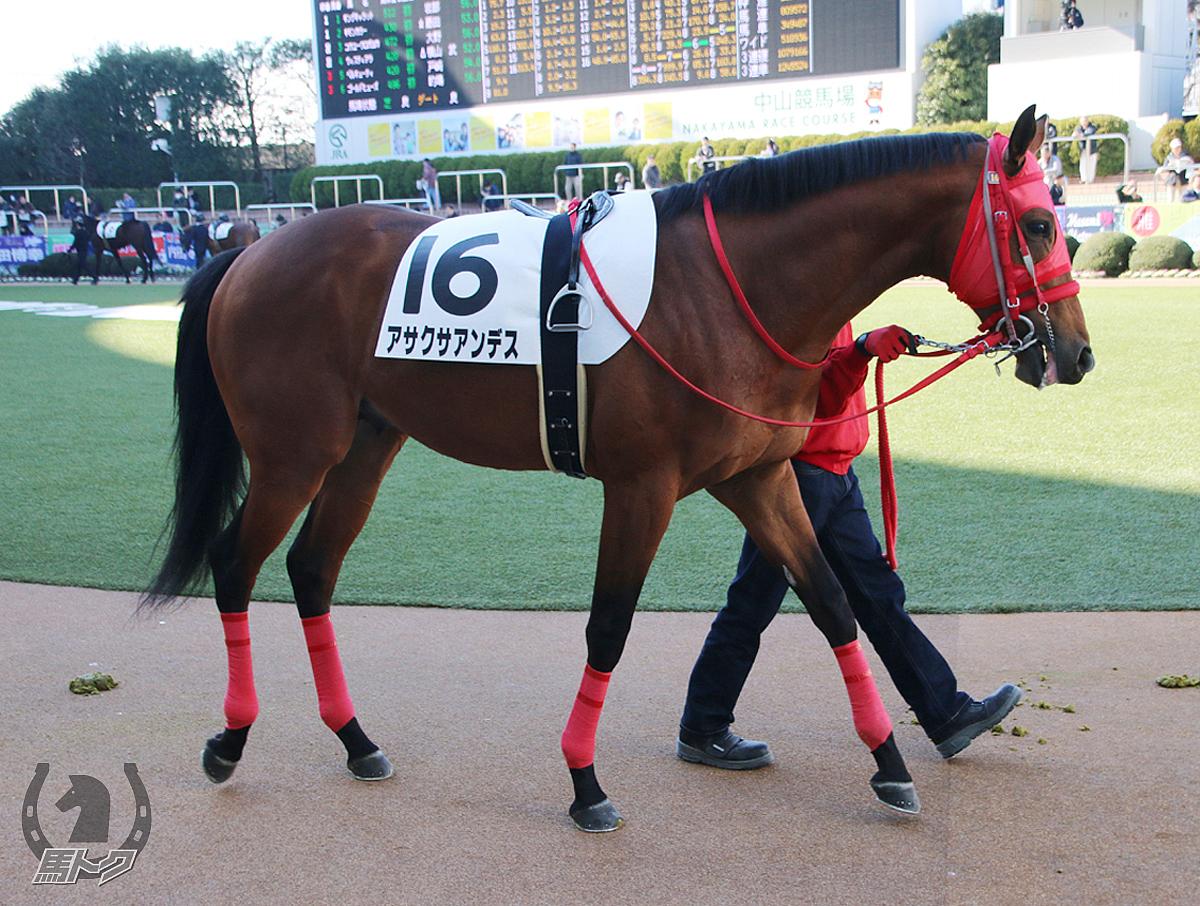 アサクサアンデスの馬体写真