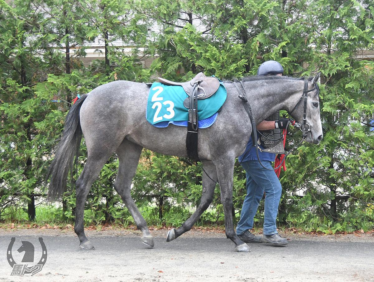 ピエナアイリスの馬体写真