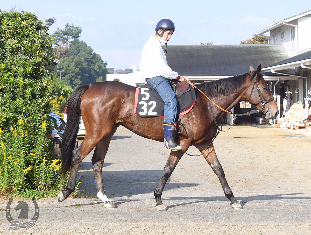 スーペルゴラッソの馬体写真