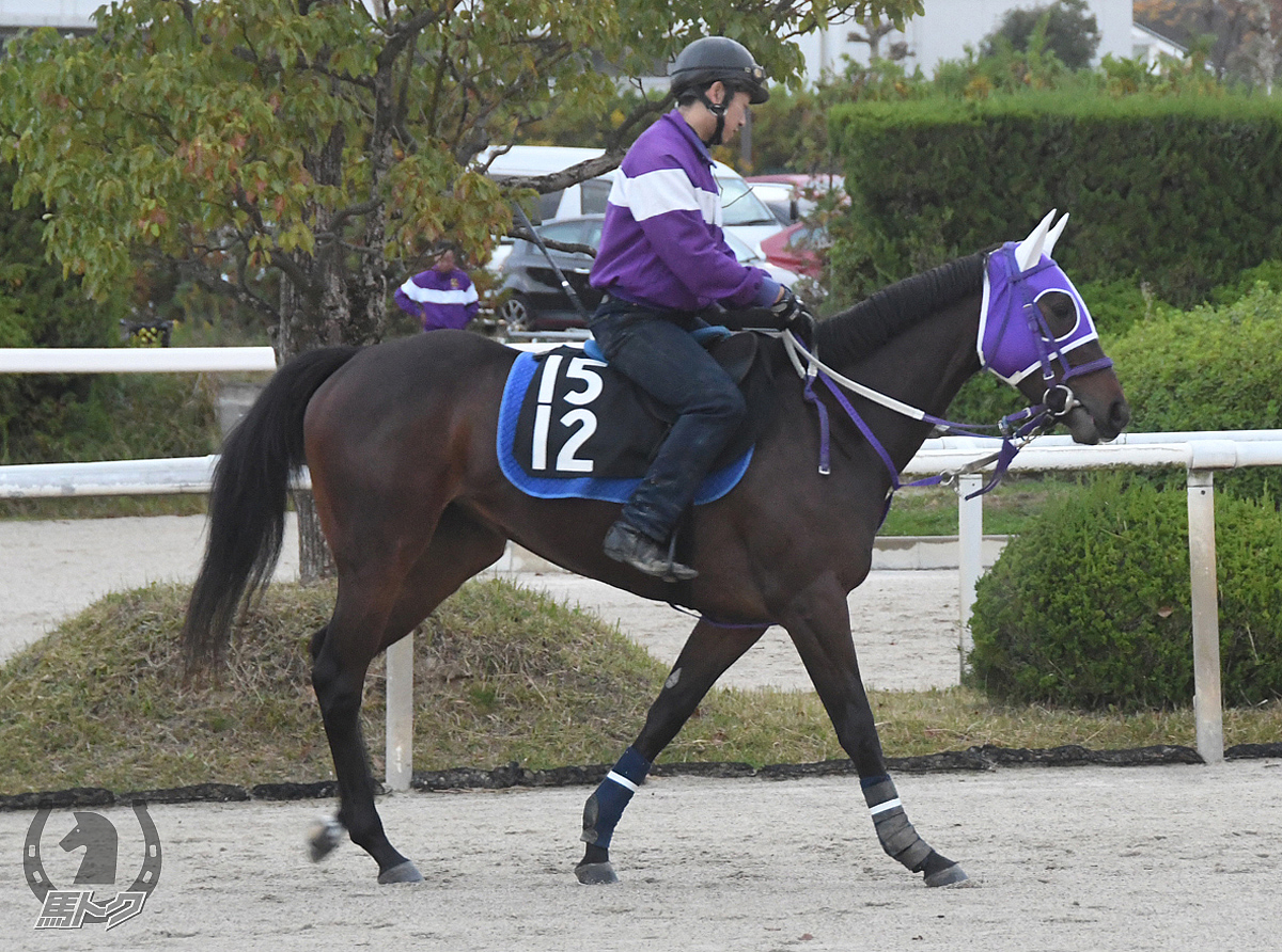 クレスコセレーナの馬体写真